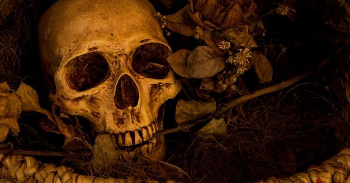 still-life-photography-with-human-skull_1357-92